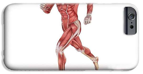 Cut-outs iPhone Cases - Male Muscles, Artwork iPhone Case by Sciepro
