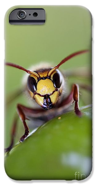 Hornets iPhone Cases - Mandibles iPhone Case by Michal Boubin
