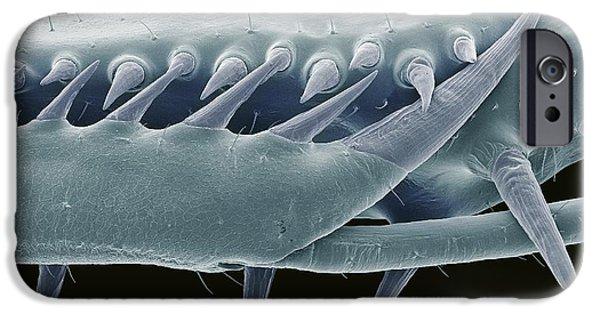 Mantodea iPhone Cases - Mantis Foreleg, Sem iPhone Case by Steve Gschmeissner