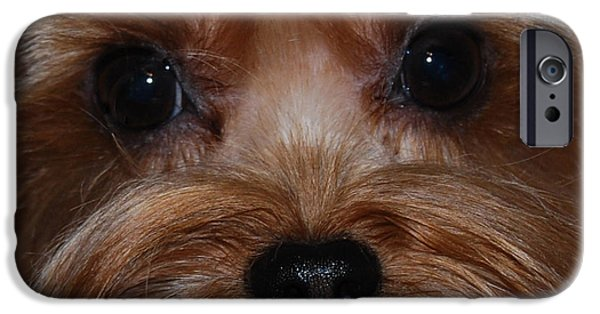 Yorkshire Terrier Art iPhone Cases - Max iPhone Case by Patricia Motley