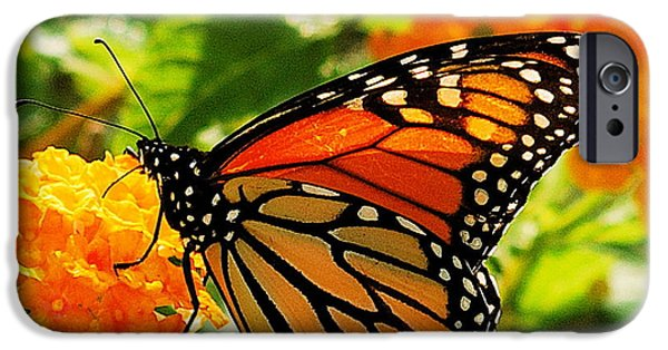 Buterfly iPhone Cases - Monarch iPhone Case by Michael Peychich