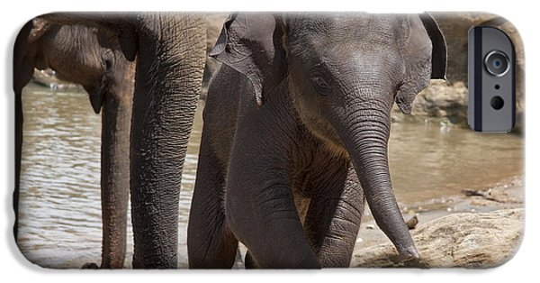 Animals Photographs iPhone Cases - Mother and baby iPhone Case by Jane Rix