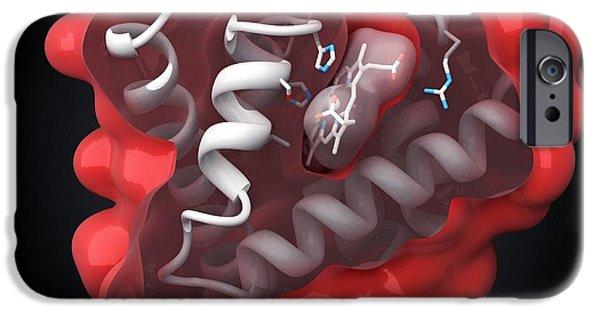Coenzyme iPhone Cases - Myoglobin Molecule iPhone Case by Visual Science