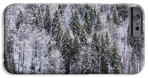 Norway iPhone Cases - Norway Spruce (picea Abies) iPhone Case by Bob Gibbons