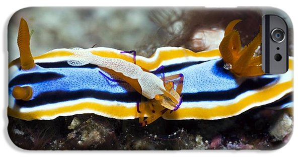 Marine iPhone Cases - Nudibranch And Emperor Shrimp iPhone Case by Georgette Douwma