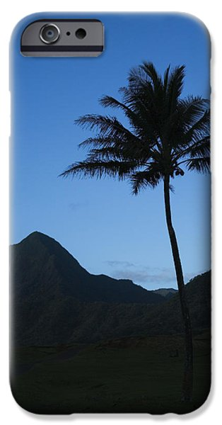 Palm and Blue Sky iPhone Case by Dana Edmunds - Printscapes