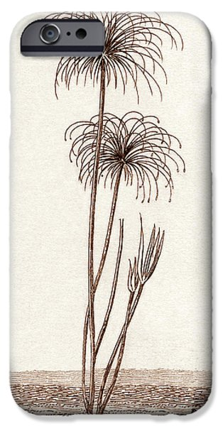 Papyrus iPhone Cases - Papyrus Reeds iPhone Case by Sheila Terry