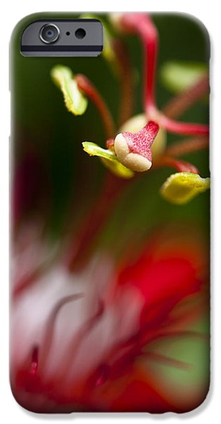 Passiflora iPhone Cases - Passiflora flower iPhone Case by Zoe Ferrie