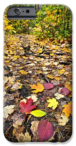 Autumn iPhone Cases - Path in fall forest iPhone Case by Elena Elisseeva
