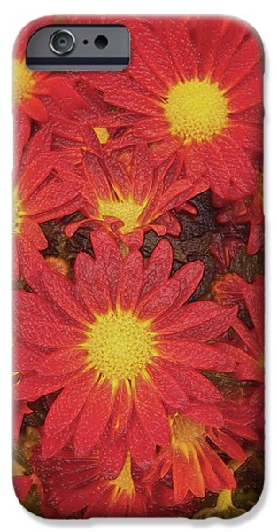Botanical Pyrography iPhone Cases - Patterned Petels iPhone Case by Debbie Portwood