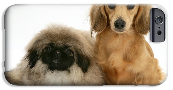 Pekingese iPhone Cases - Pekingese And Dachshund Puppies iPhone Case by Jane Burton