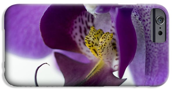Phalaenopsis iPhone Cases - Phalaenopsis Labellum (phalaenopsis Sp.) iPhone Case by Lawrence Lawry