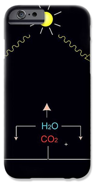 Photosynthesis, Artwork iPhone Case by Francis Leroy, Biocosmos