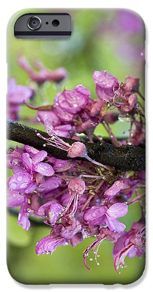 Pink flowers of the Love Tree iPhone Case by Frank Tschakert