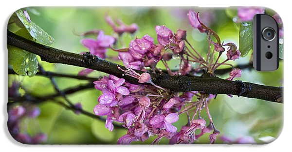 Rainy Day iPhone Cases - Pink flowers of the Love Tree iPhone Case by Frank Tschakert