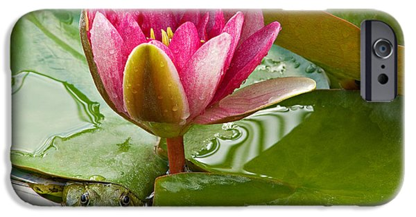 Amphibian iPhone Cases - Pink Water Lily and Green Frog iPhone Case by Dean Pennala