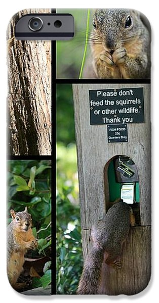 Please Don't Feed The Squirrels iPhone Case by Elizabeth Hart