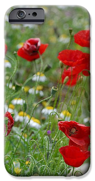 Poppies iPhone Case by Guido Montanes Castillo