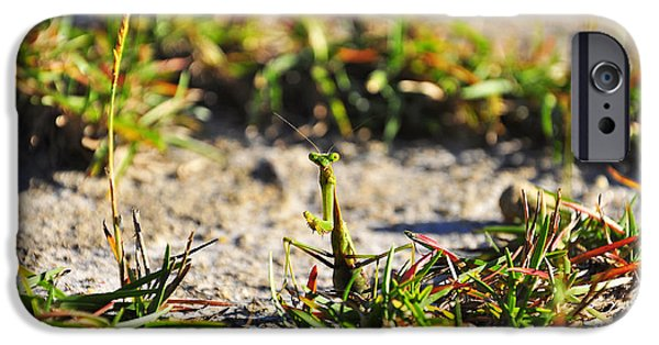 Mantises iPhone Cases - Praying Mantis iPhone Case by Al Powell Photography USA