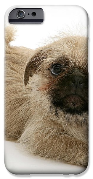 Pugzu And Pug Puppies iPhone Case by Jane Burton