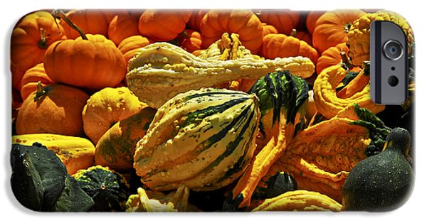 Gourd iPhone Cases - Pumpkins and gourds iPhone Case by Elena Elisseeva