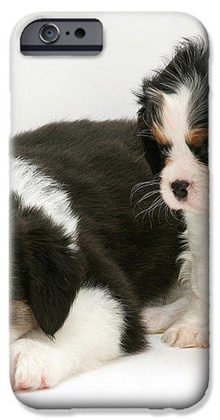 Puppies iPhone Case by Jane Burton