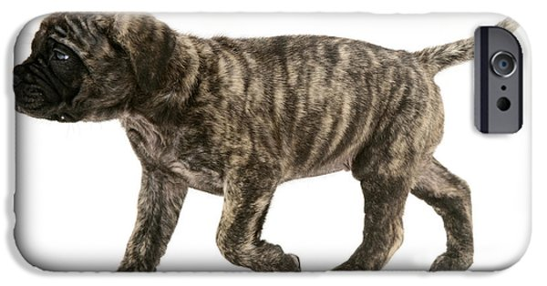 Dog Trots Photographs iPhone Cases - Puppy Trotting iPhone Case by Jane Burton
