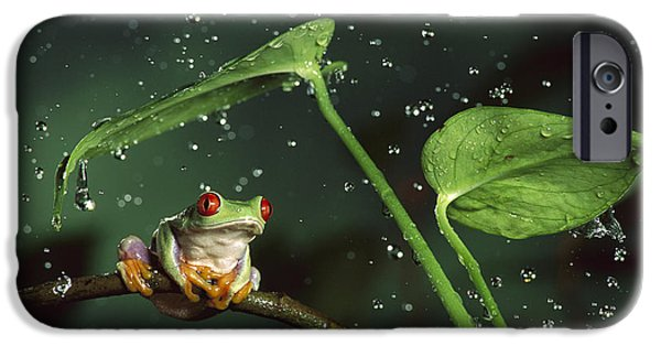 Frogs Photographs iPhone Cases - Red Eyed Tree Frog in the Rain iPhone Case by Michael Durham