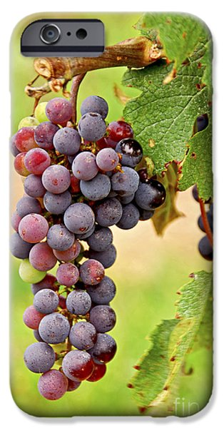 Red grapes iPhone Case by Elena Elisseeva