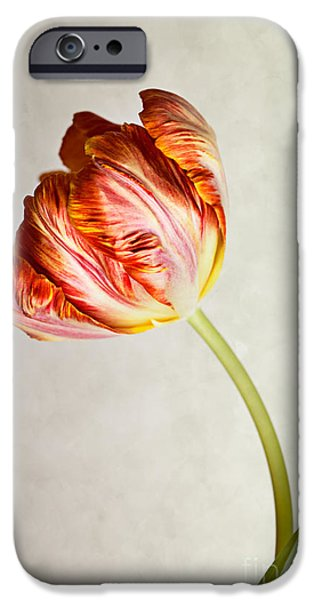 Flora iPhone Cases - Red Tulip iPhone Case by Nailia Schwarz