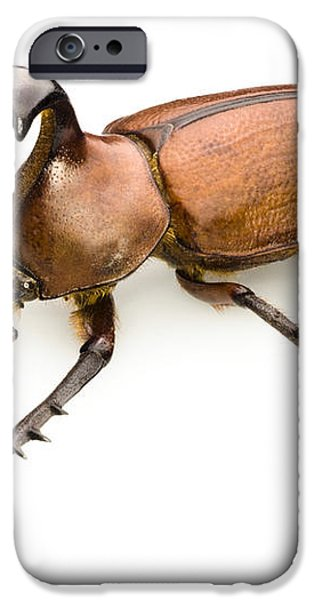 Rhinoceros Beetle iPhone Case by Lawrence Lawry