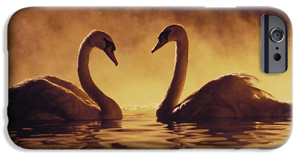 Swans... iPhone Cases - Romantic African Swans iPhone Case by Brent Black - Printscapes