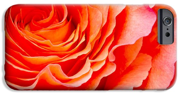 Roses iPhone Cases - Rose iPhone Case by Angela Doelling AD DESIGN Photo and PhotoArt