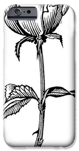 Linoleum iPhone Cases - Rose, Lino Print iPhone Case by Gary Hincks