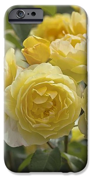 Rose (rosa 'charlotte Auspoly') iPhone Case by Dr Keith Wheeler