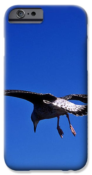 Seagull in flight iPhone Case by John Greim