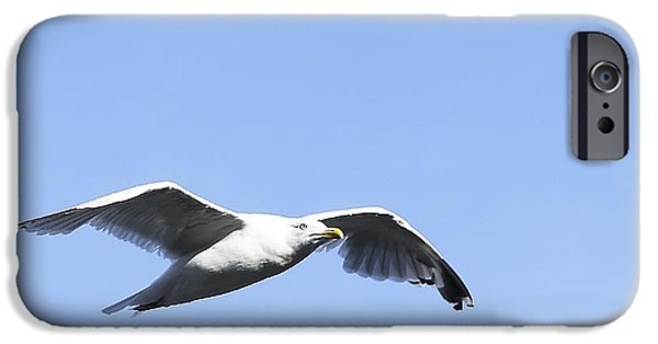Flying Seagull iPhone Cases - Seagull iPhone Case by Svetlana Sewell