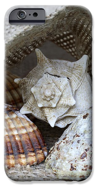 Maritime iPhone Cases - Seashells iPhone Case by Frank Tschakert