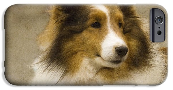 Sheltie iPhone Cases - Sheltie iPhone Case by Rebecca Cozart