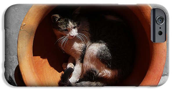 Pictures Of Cats Photographs iPhone Cases - Siesta 3 iPhone Case by Xueling Zou