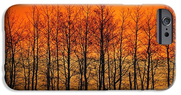 Sun Breakthrough iPhone Cases - Silhouette Of Trees Against Sunset iPhone Case by Don Hammond