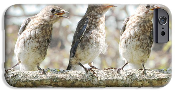 Baby Bird iPhone Cases - Sing Sing Sing iPhone Case by Amy Tyler