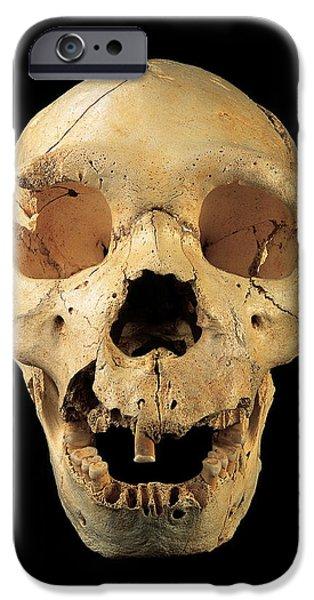 Evolution Of Humanity iPhone Cases - Skull 5, Sima De Los Huesos iPhone Case by Javier Truebamsf