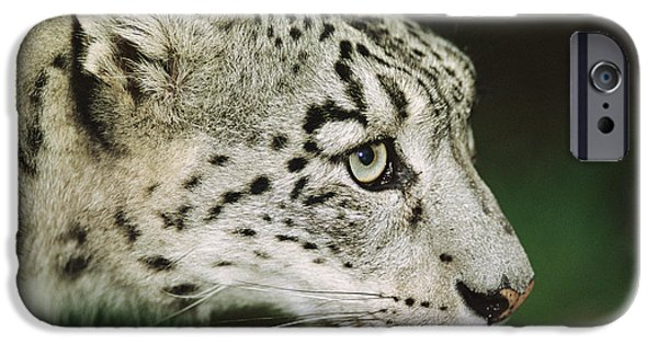 Snow iPhone Cases - Snow Leopard iPhone Case by Duncan Shaw