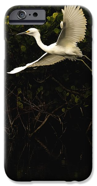 Snowy Day iPhone Cases - Snowy Egret, Florida iPhone Case by Robert Postma