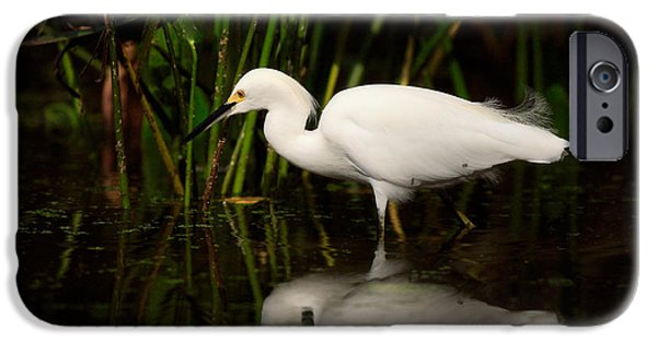Snowy iPhone Cases - Snowy Egret iPhone Case by Matt Suess