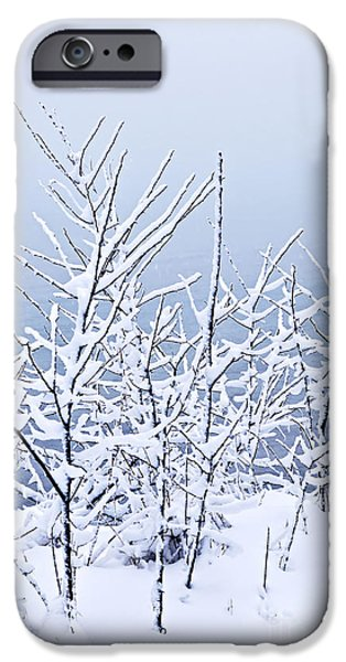 Snowy iPhone Cases - Snowy trees iPhone Case by Elena Elisseeva