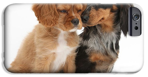Spaniel Puppy iPhone Cases - Spaniel & Dachshund Puppies iPhone Case by Mark Taylor