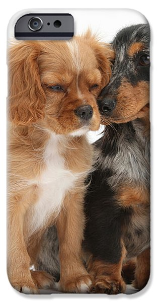 Spaniel & Dachshund Puppies iPhone Case by Mark Taylor