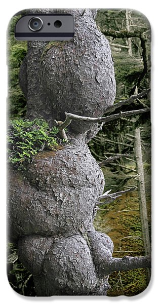 Survivor Art iPhone Cases - Spruce Burl Olympic National Park Beach 1 WA iPhone Case by Christine Till